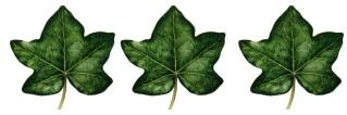 3 leaves