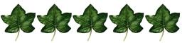 5 leaves